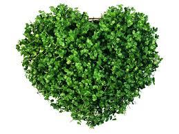 greenso1