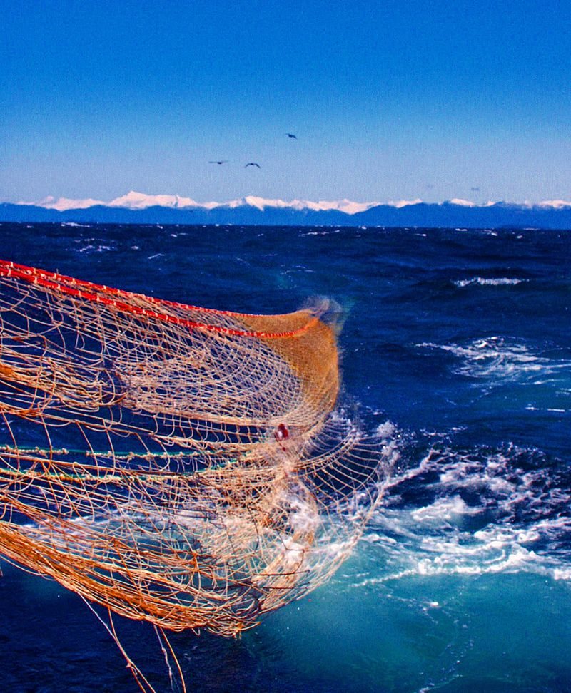 800px-Setting_a_trawl_in_Stephens_Passage_,_Alaska