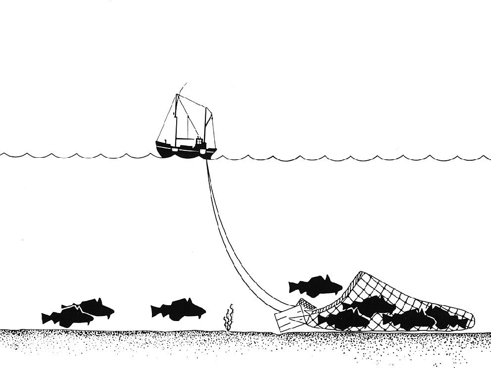 Trawling_Drawing
