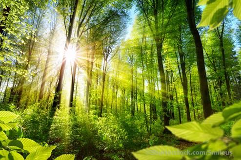 Το Ευρωκοινοβούλιο ζητάει νομικά δεσμευτικούς στόχος για την βιοποικιλότητα Biomo
